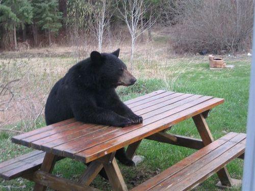 bear-camping